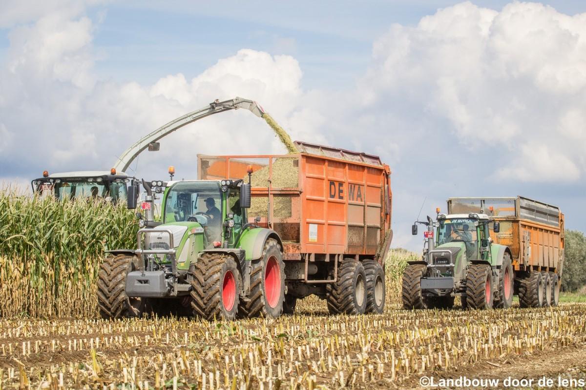 Maïs hakselen met loonwerken Verplancke